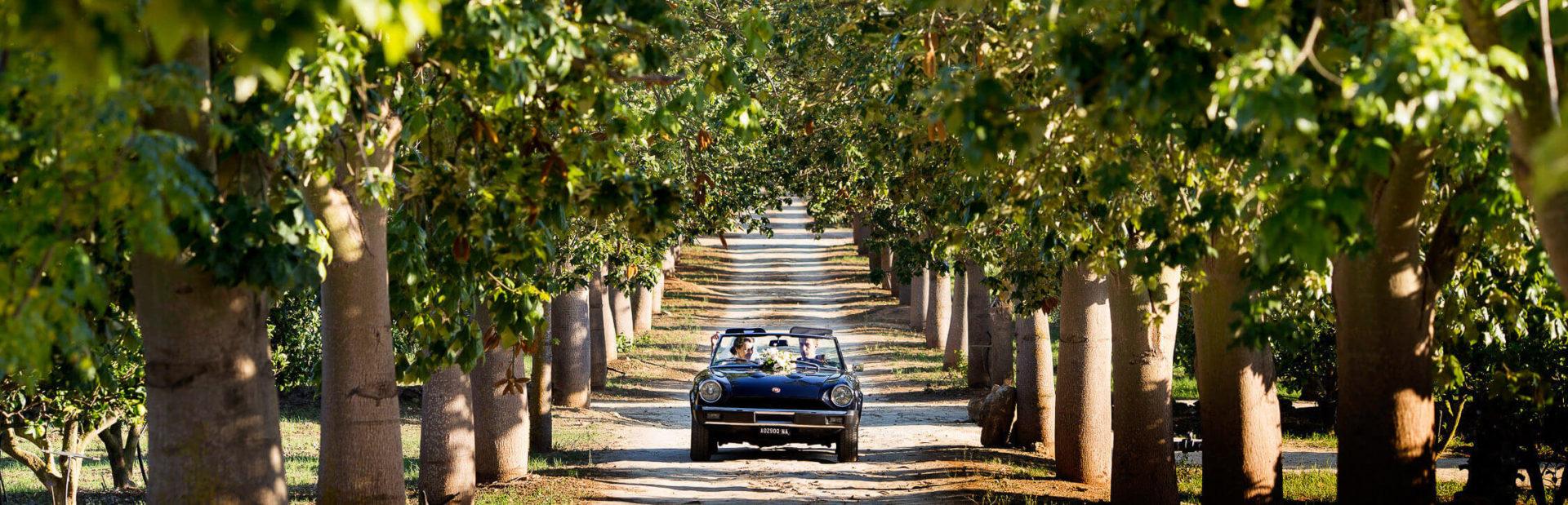 Sposi in auto storica percorrono viale alberato, foto per matrimonio di Nino Lombardo